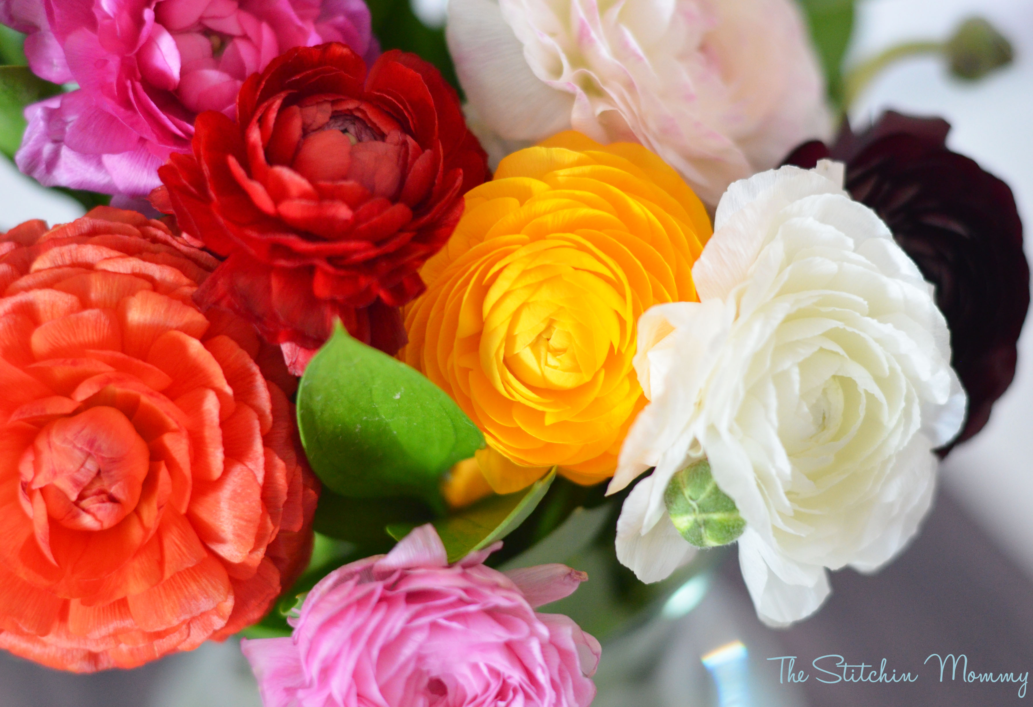 Thebouqs Beautiful Fresh Flowers At Your Door The Stitchin