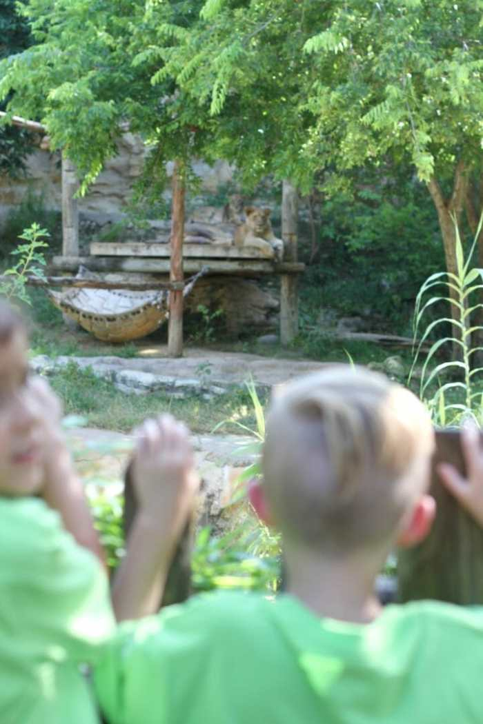 san antonio zoo kids camp