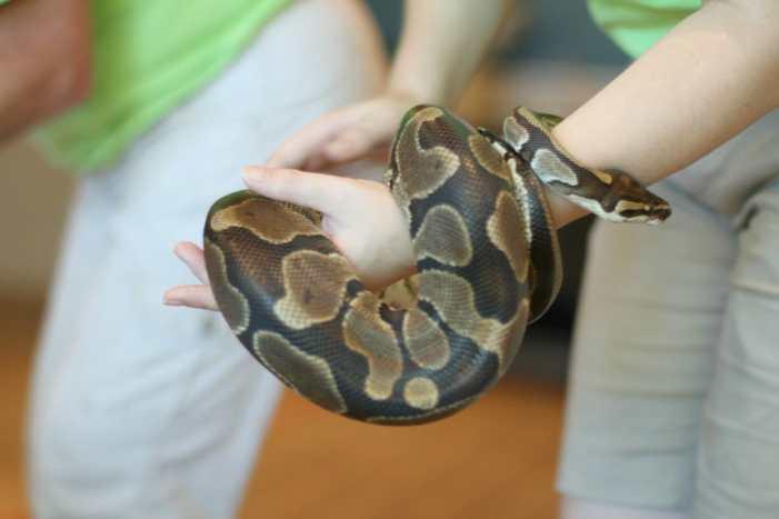 snake san antonio zoo