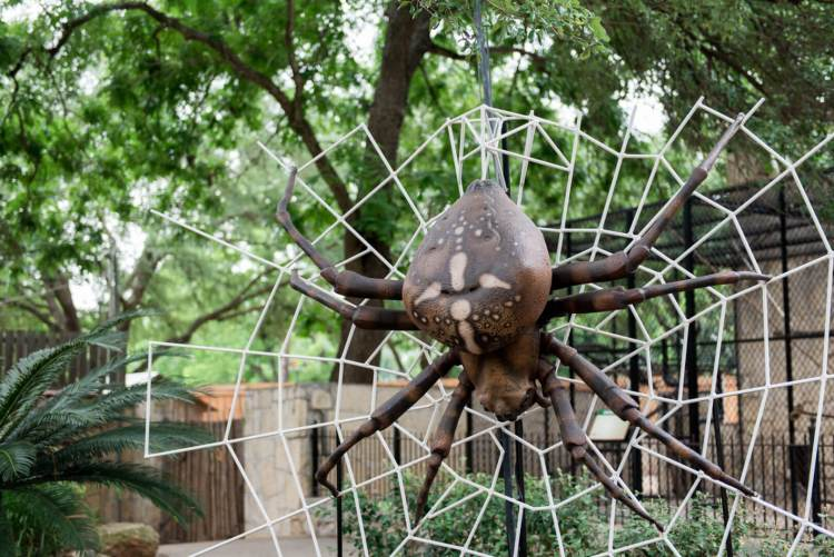 san antonio zoo spider