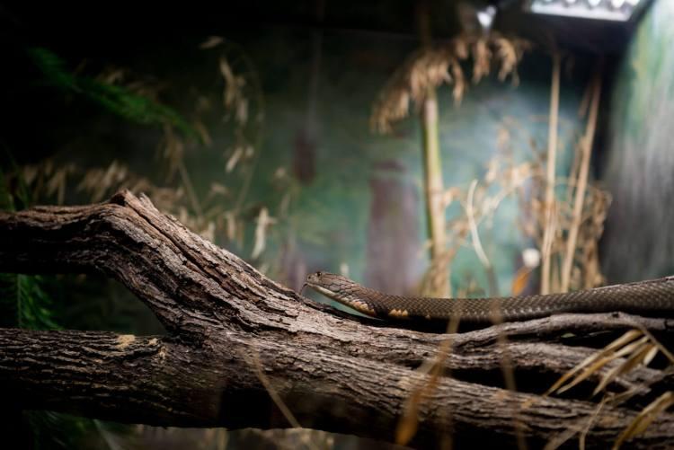 san antonio zoo snake