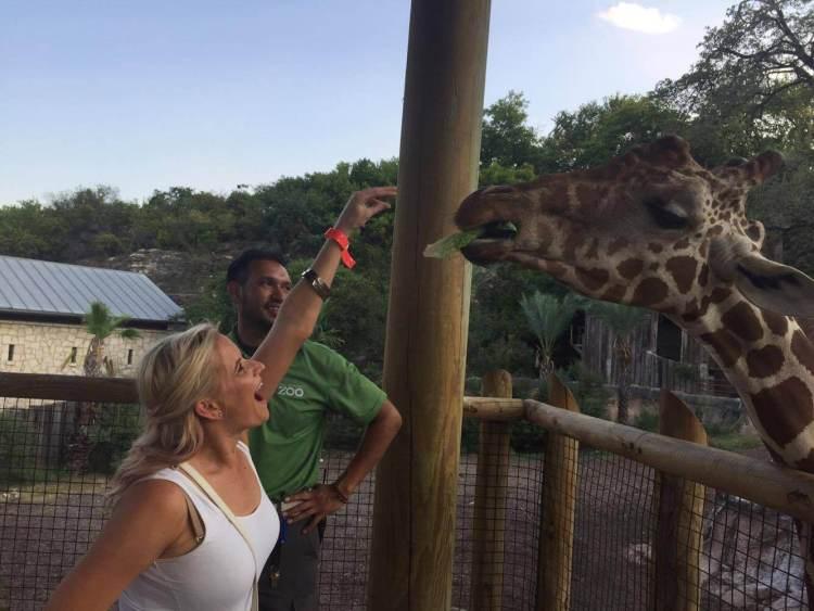 san antonio zoo feeding giraffes