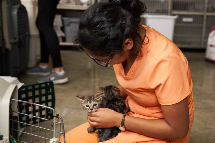 How Can You Help Animals Affected by Hurricane Harvey