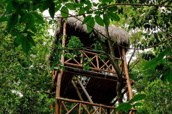 tour-observation-tulum-arbre