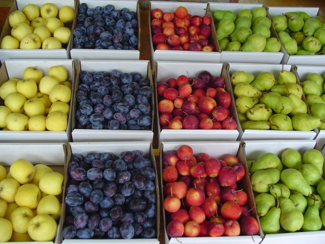 Fruit Stand - Perfect for No Sugar Lent