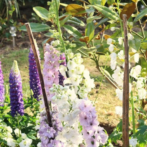 image of flowers in garden for post on British racism