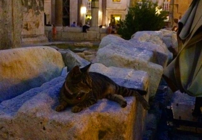 cats-feline-travel-split-croatia