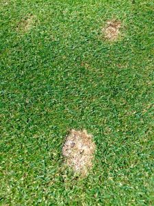 Pitch Marks on the Green