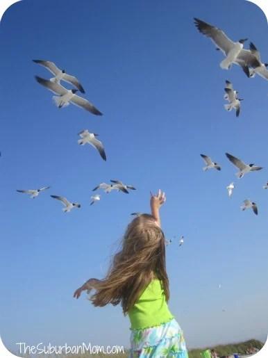 feeding-birds-3