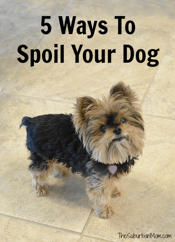 How To Spoil Your Dog