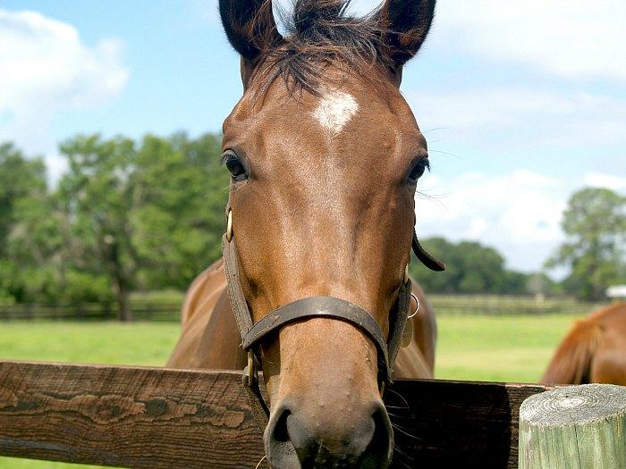 Ocala Marion County - Horse Capital of the World