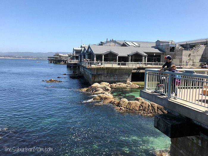 Monterey Bay Aquarium View