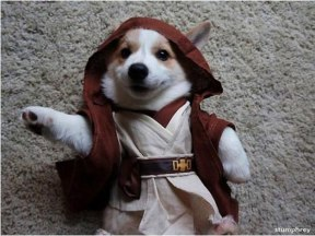 Image result for star wars empire dog