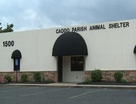 Caddo Parish Animal Shelter where Celina Cabrera worked