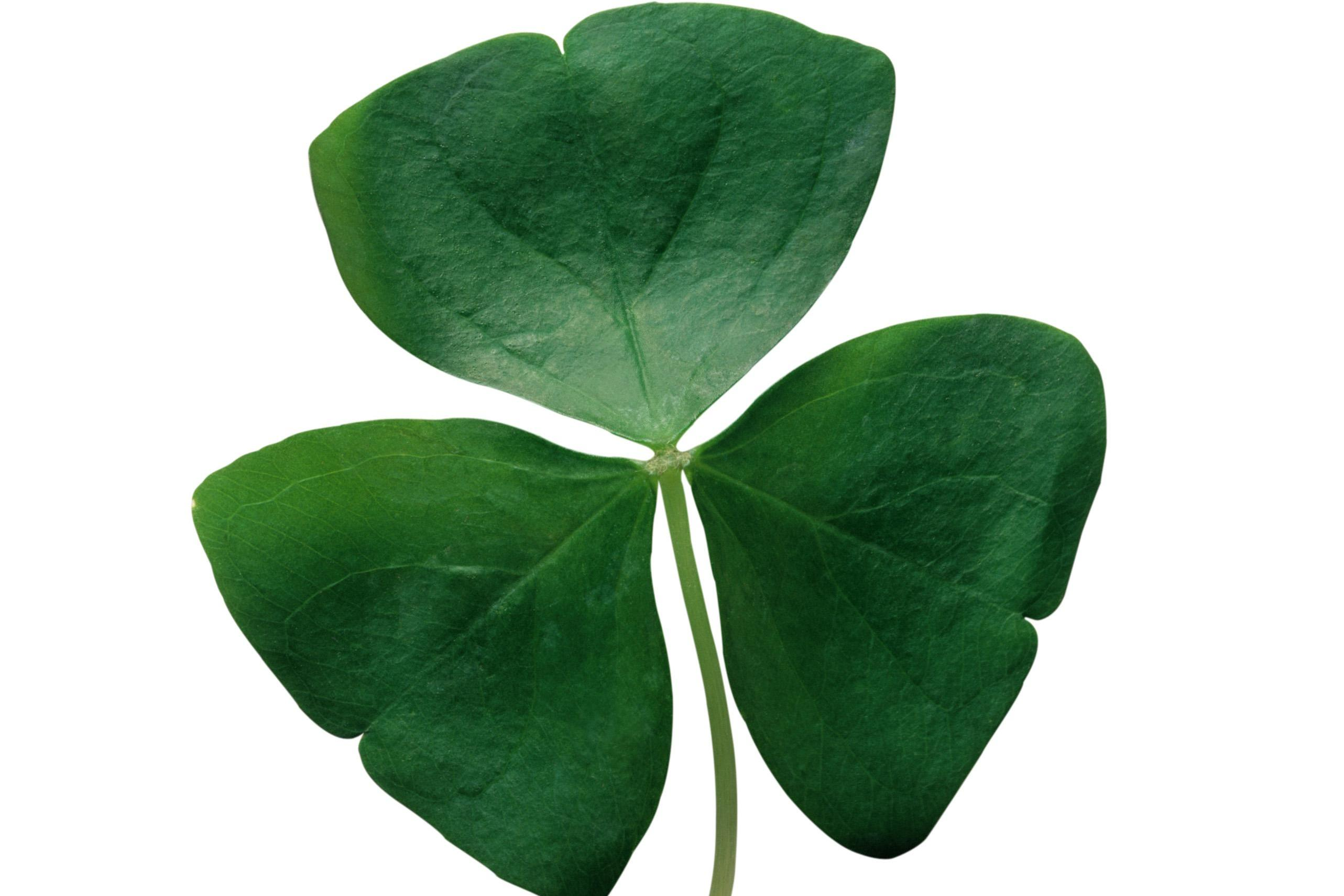 what is a shamrock how can you make your own and why is it linked