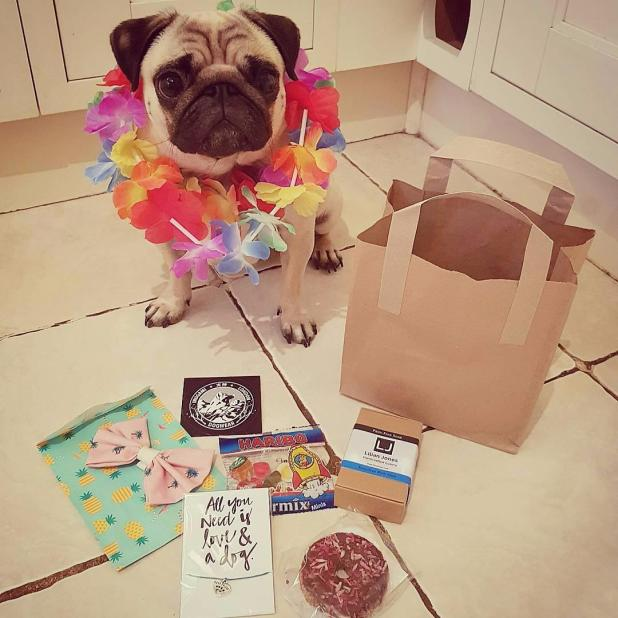 @barry_the_puggy: from Coventry, 39.3k followers, can earn £250 per day