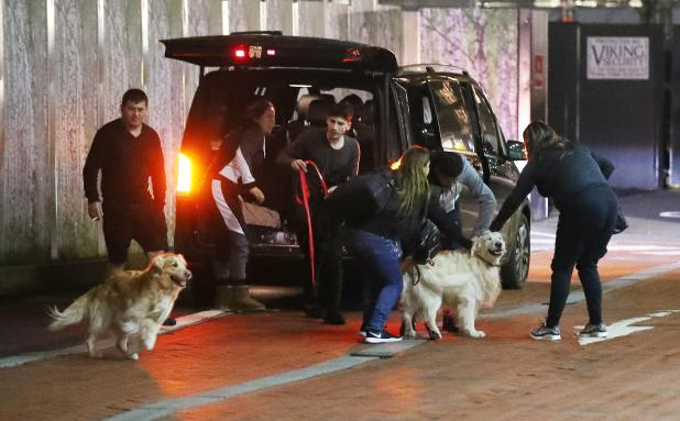 nintchdbpict000380307509 - Alexis Sanchez's dogs wear Manchester United shirts after arriving at team hotel