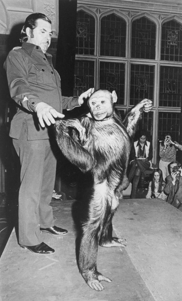 Despite claims in the 1970s that Oliver was a human-chimp hybrid, it was proven that the animal was not a humanzee in the 1990s