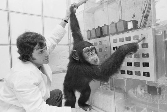Lana, a two and half year old chimpanzee, uses a typewriter-like device to punch out sentences using symbols for words in an experiment in the 1970s