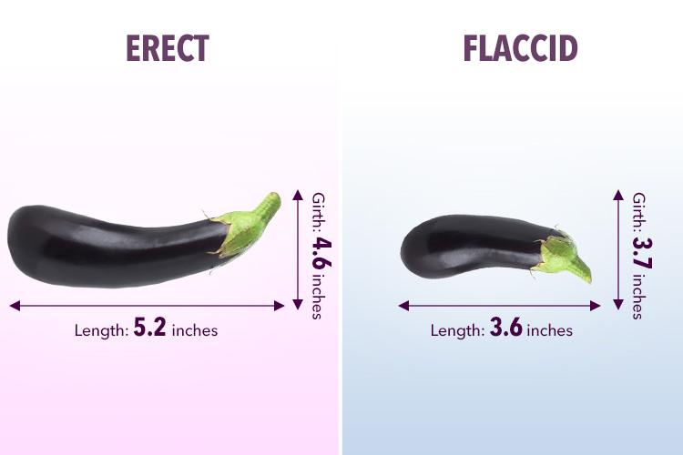 On average an erect penis measures about 5.2 inches long and a flaccid penis measures at 3.6 inches long