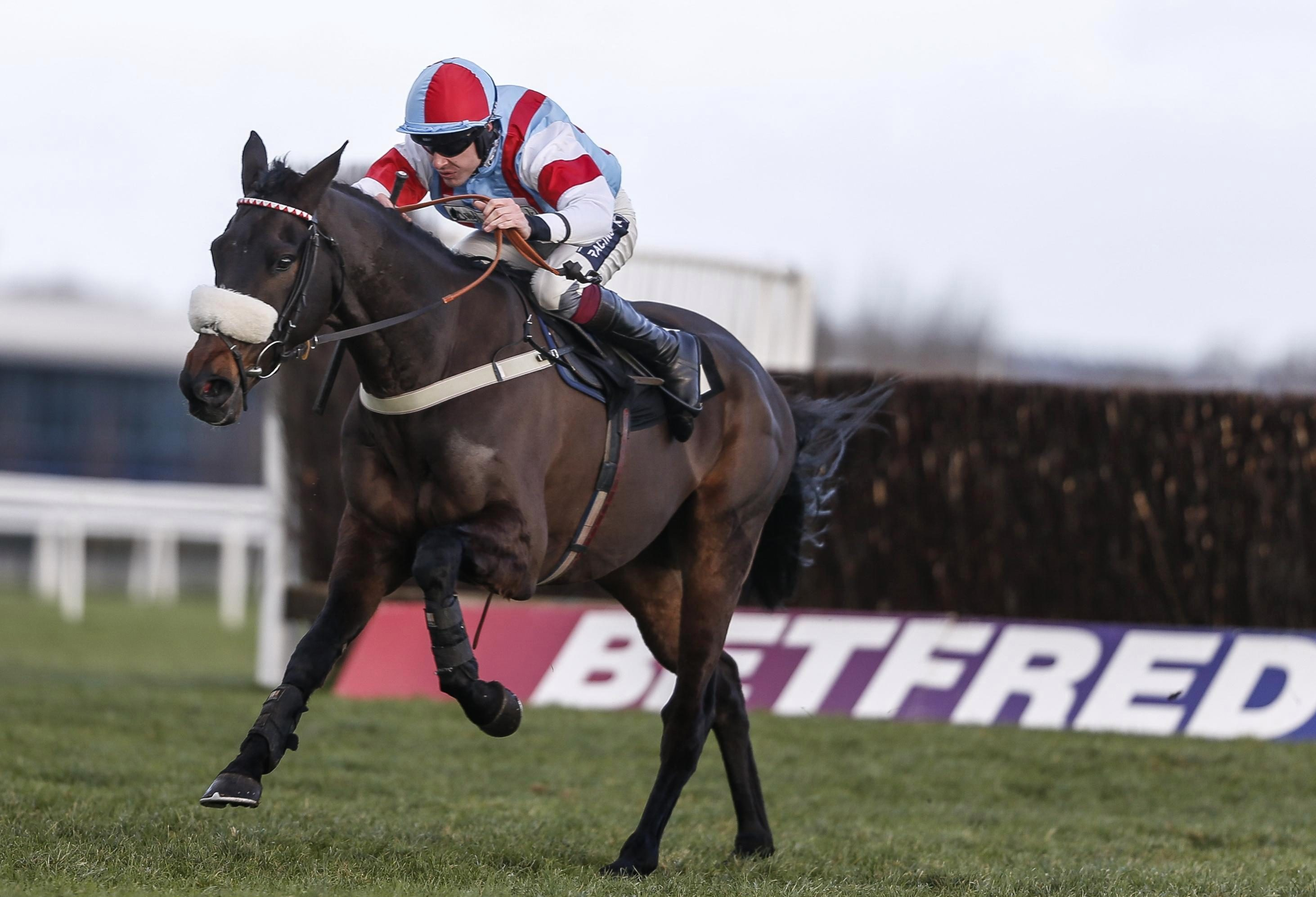 Saint Calvados to be put away for the remainder of the season