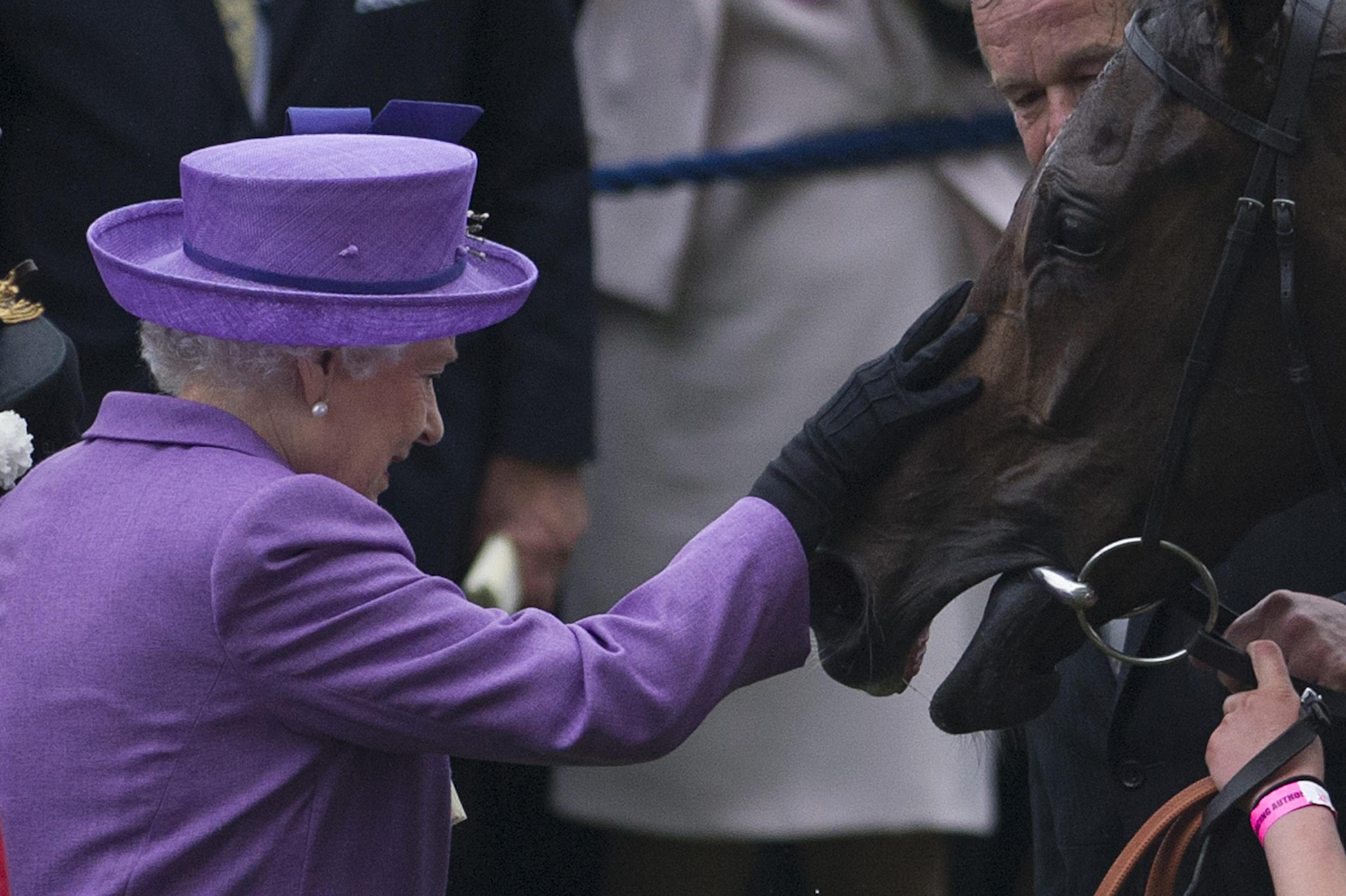 The Queen greets her horse Estimate, who won the Gold Cup in 2013