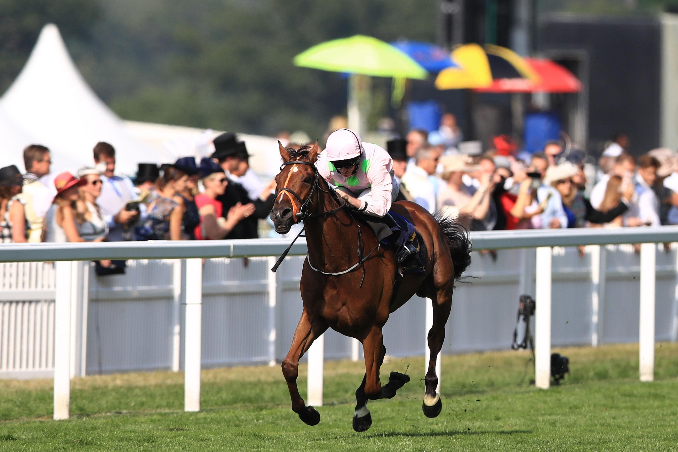 Thomas Hobson went on to finish sixth in last year's Melbourne Cup