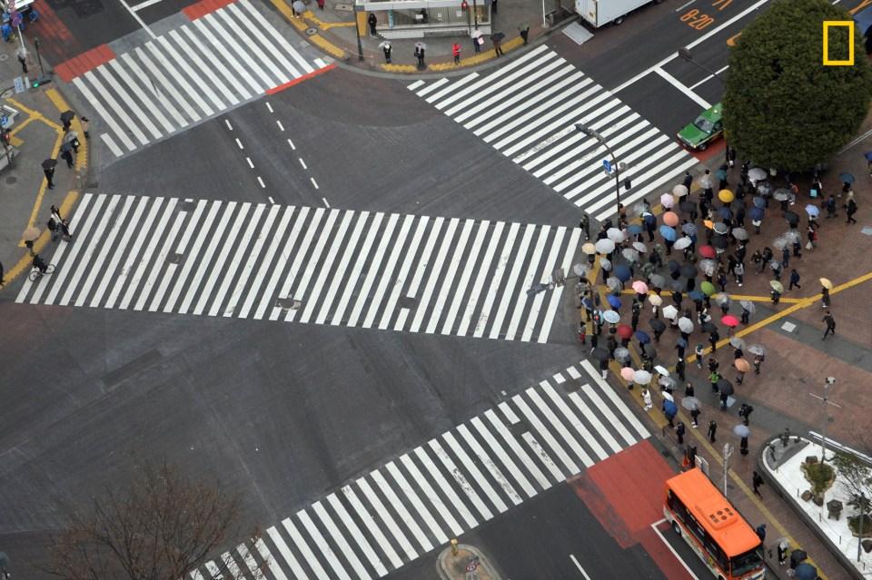 Image result for zebra crossing