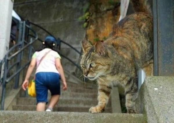 optical illusions find cat # 50
