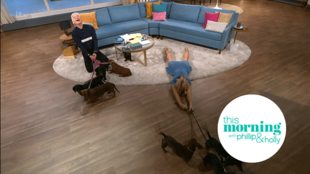 Their power proved too much as she fell to her stomach and the adorable canines pulled her across the studio floor
