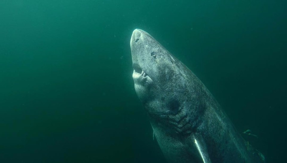 The world's oldest animals from the 500-year-old shark born