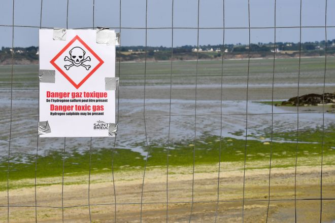 This summer, six Brittany beaches were closed because of a mass of dangerous algae