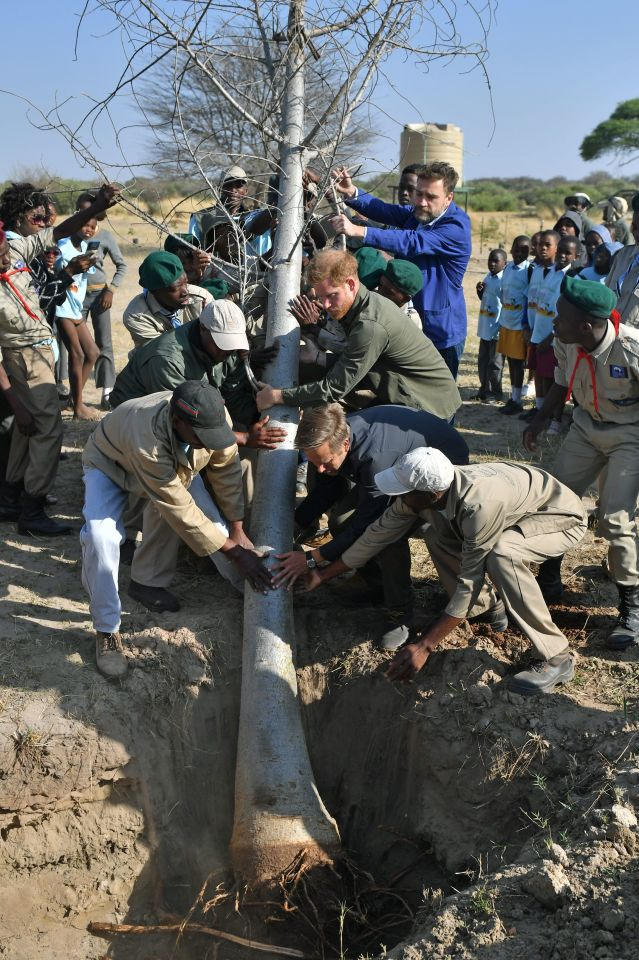 Prince Harry helped to plant a tree during his visit to Botswana