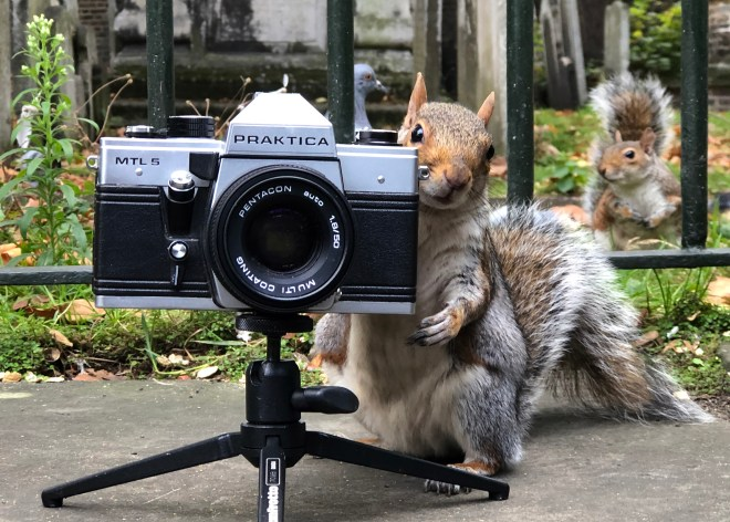 This cheeky squirrel appeared to turn the tables on the photographer