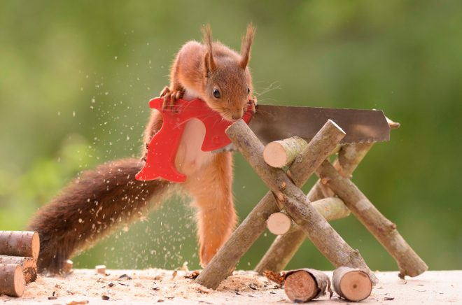 This crafty squirrel is clearly a cut above the rest