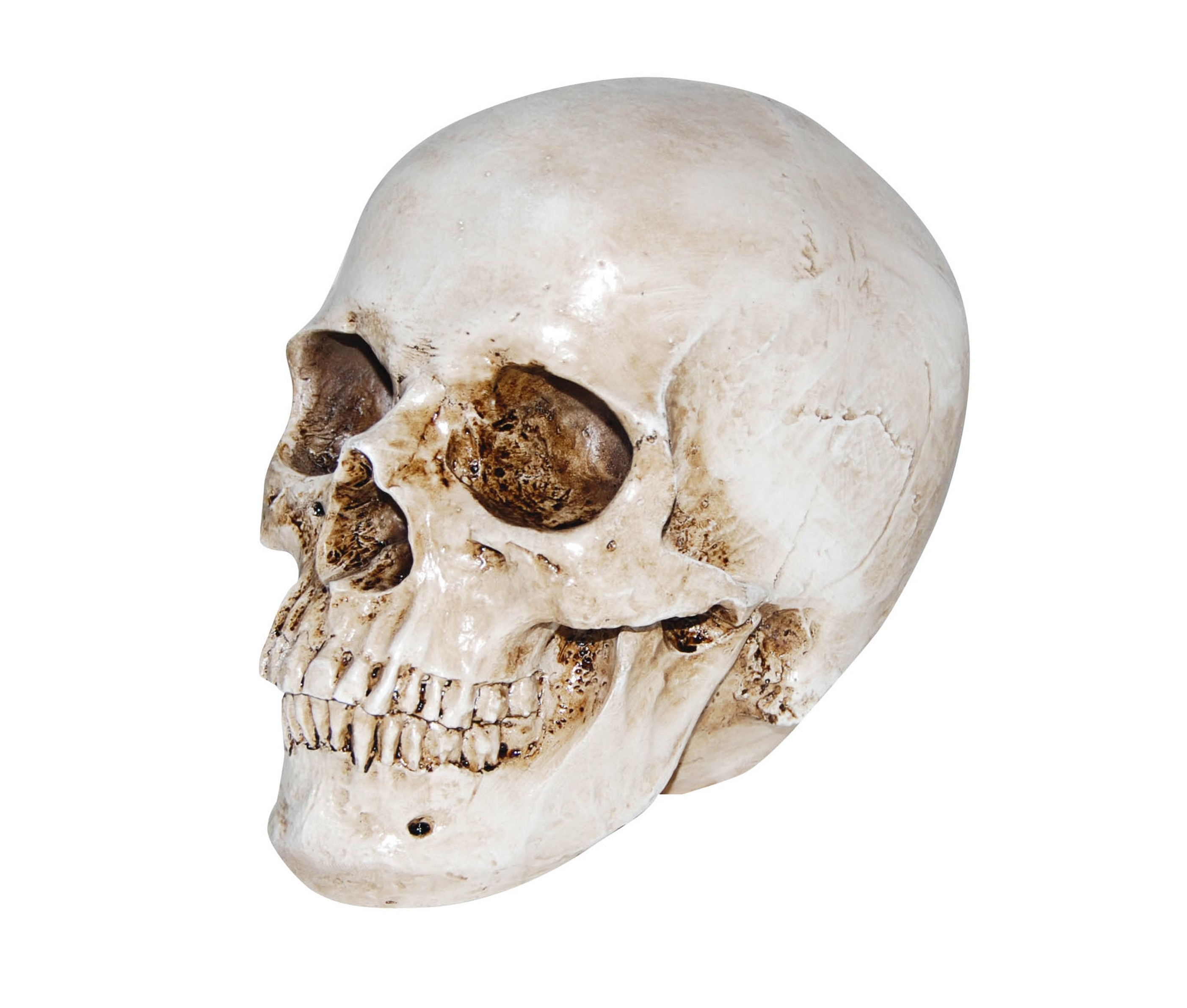 The human head and face is made up of 29 bones - including the body's smallest bones in your ears