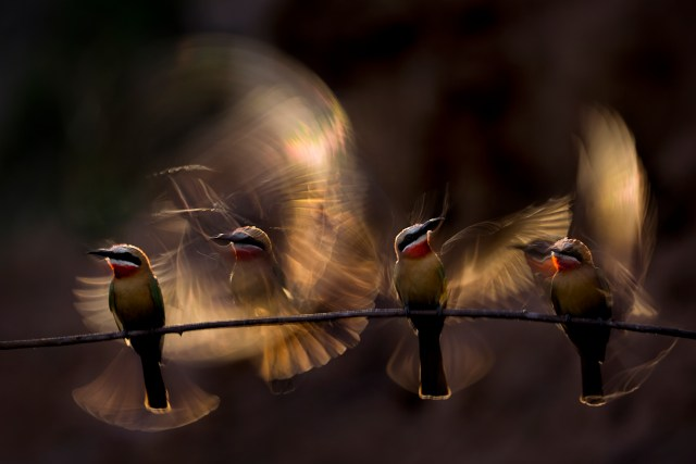 Benc Mate was the finalist in the 'Nature Art' category with this incredible photograph of four birds flapping their wings