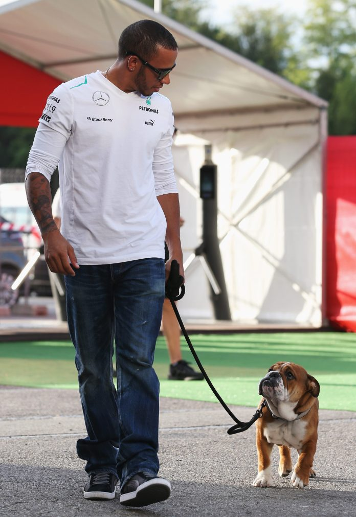 The Bulldog has turned to a number of F1 races