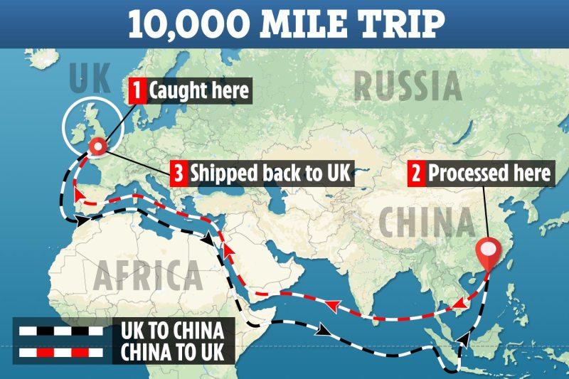 Os trabalhadores recebem £ 2 por dia para filé e congelamento do peixe antes que ele seja transportado 5.000 milhas de volta para a Grã-Bretanha dez semanas depois