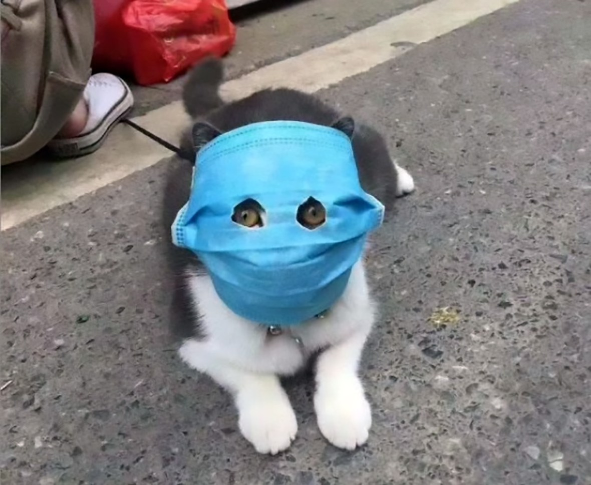 Pets in China forced to wear bizarre makeshift face masks made by ...