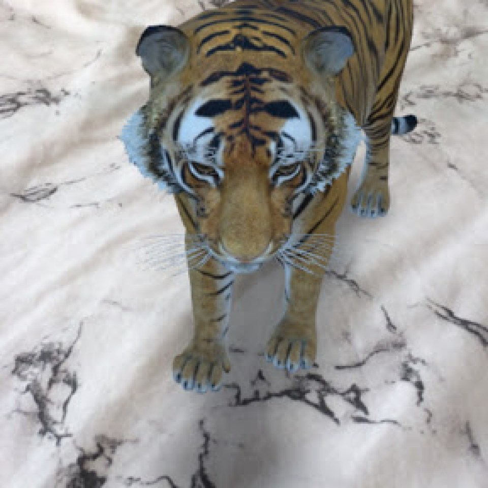 You Can Get Amazing 3d Animals Like Sharks And Tigers Right In