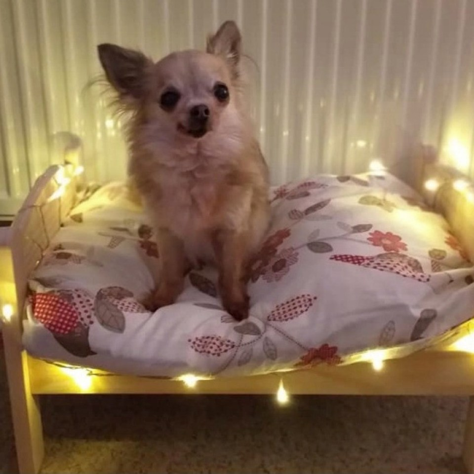 The adorable dogs are the perfect size to enjoy the miniature bed