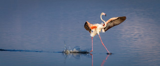 Tommy Mees spotted this flamingo appearing to take a walk on Lake Magadi, Serengeti, Tanzania