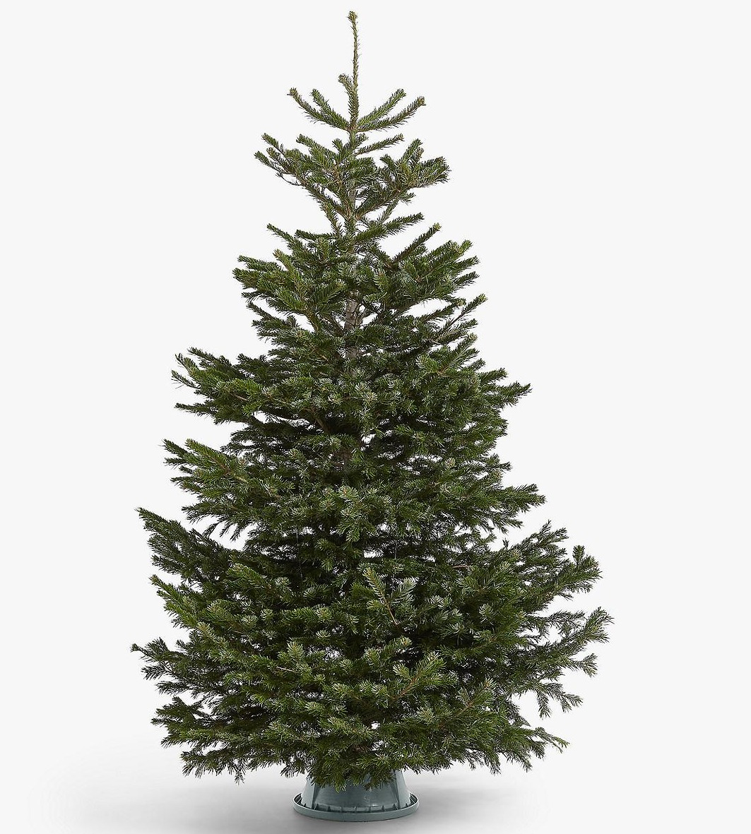 If you don't mind spending a bit more, John Lewis will be selling real Christmas trees from £75 this year