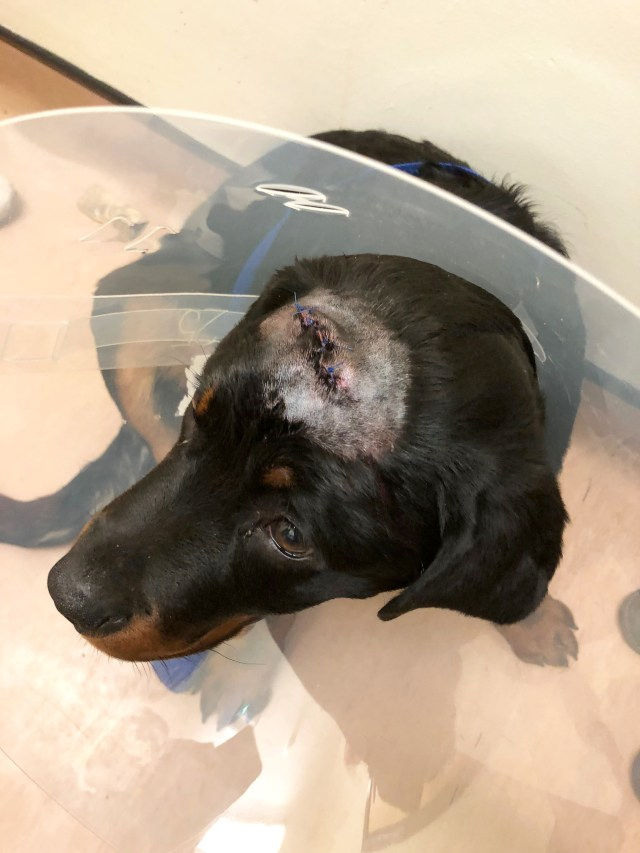 He then faced an 'out-and-out battle' for around ten minutes, during which his puppy Zeus was injured