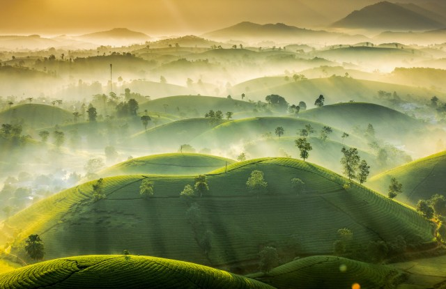 First runner up was a picture called Tea Hills by Vu Trung Huan, from Vietnam - showing the misty hills just before a beautiful sunrise
