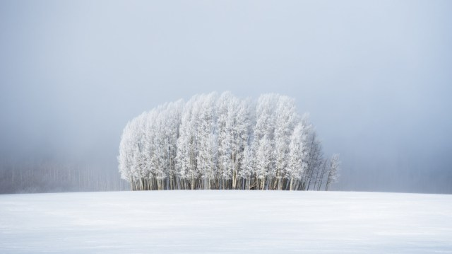 Stunning white uniform trees amid the mist in Medicine Bow-Routt National Forest, not too far from Steamboat Springs, Colorado