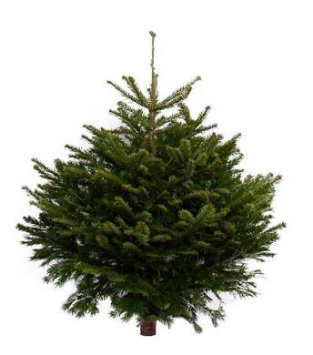 Christmas shoppers can nab this 4ft version for £39.95, which could come in handy if you don't have a lot of space