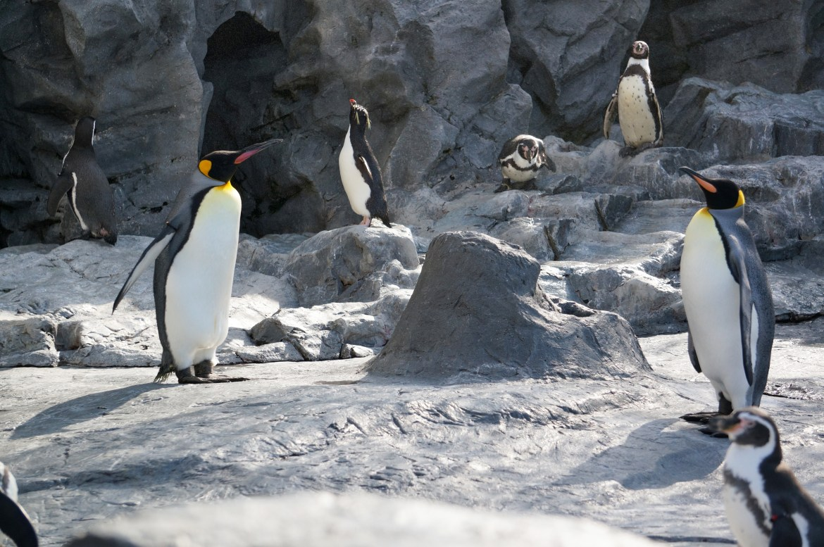 Edinburgh Zoo is regarded as one of the best in the country