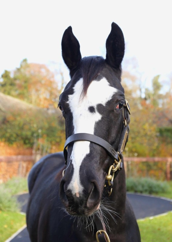 Mystic Moonshadow will hopefully win a lot of money for charity